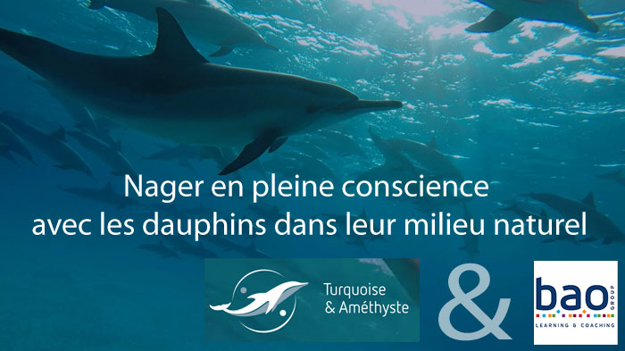 dauphins-17-08-2016-2