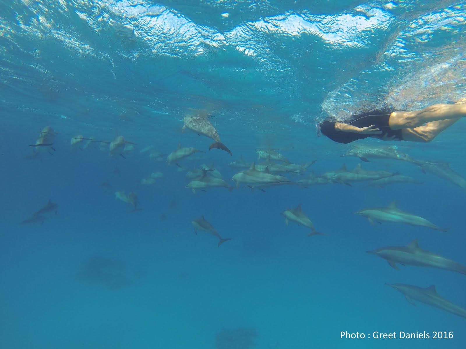 Nager avec les dauphins une le on de coaching baozoom com for Nager avec les dauphins nice
